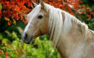 Palomino_horse